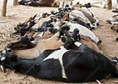 livestock in mozambique