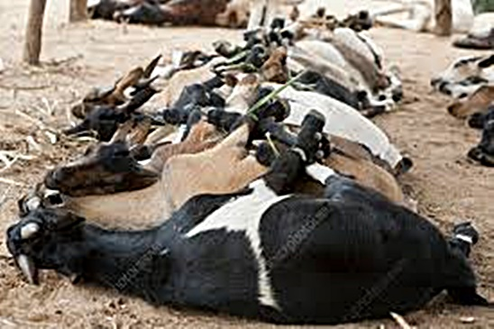 livestock in mozambique