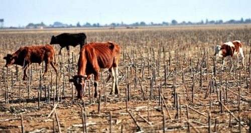 2019 drought in sa